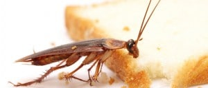 roach in home eating bread